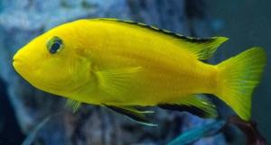 aquarium-1477385