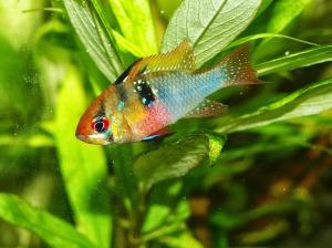 aquarium-626548_1280