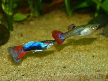 aquarium-626558_1280
