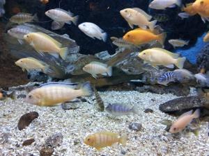 aquarium-661177_1920