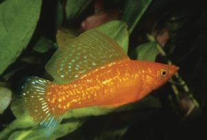aquarium-964237_1280
