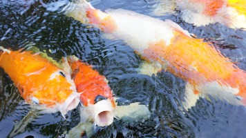 fish-1166053_1920