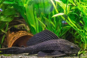 fish-1293971_1920