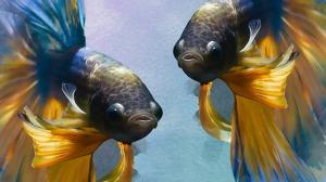 fish-1373657_1280