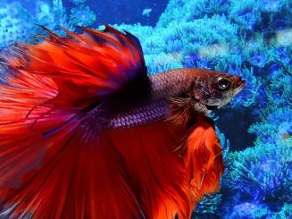 fish-1373753_1920
