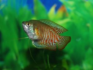 fish-173431_1280