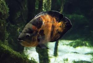fish-291494_1280