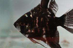 fish-390117_1920