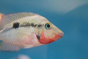fish-390132_1920