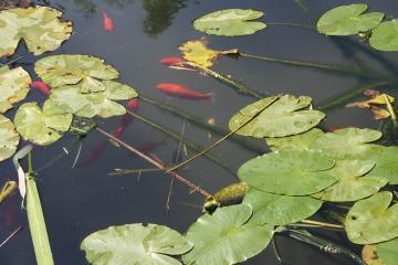 fish-499471_1920