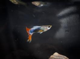 fish-514189_1920