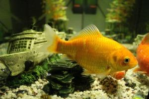 fish-563637_1920