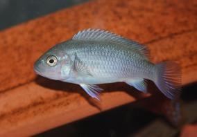 fish-735187_1920