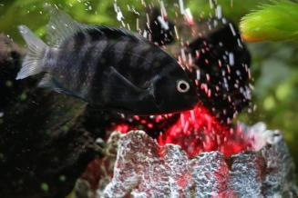 fish-860986_1920