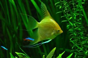 fish-936504