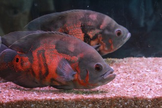 fish-390126_1920