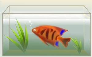 fish-47651_1280
